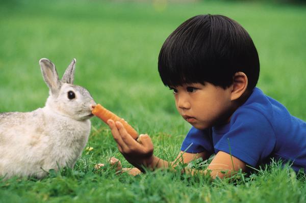 Chew Like a Bunny